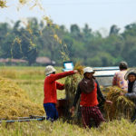Agricultural Transformation in Asia: Policy Options for Food and Nutrition Security