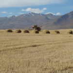 From Transition to Transformation: Food Security in Central Asia