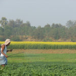 Partnership Potential: Engaging the Private Sector to Improve Food Security in Eastern India
