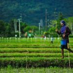 Seed, Fertilizer and Agricultural Input Policies in Asia