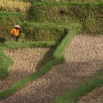 farmer-in-indonesia