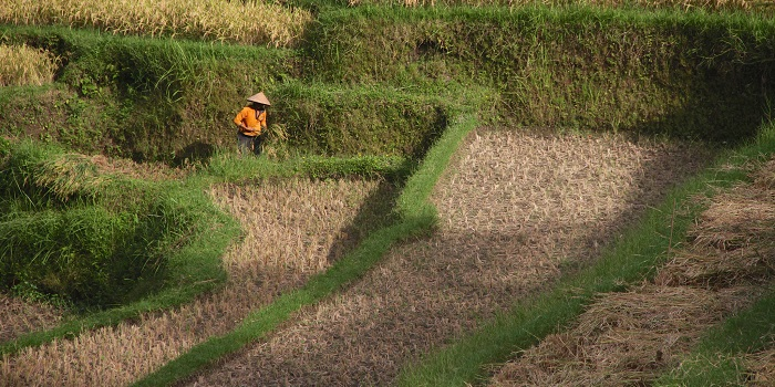 What Is the Future of Small Farms in Asia?