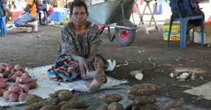 Poverty prevalence and household expenditure in four lowland areas of rural Papua New Guinea