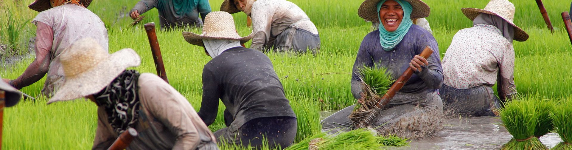 Philippine rice trade liberalization: Impacts on agriculture and the economy, and alternative policy actions
