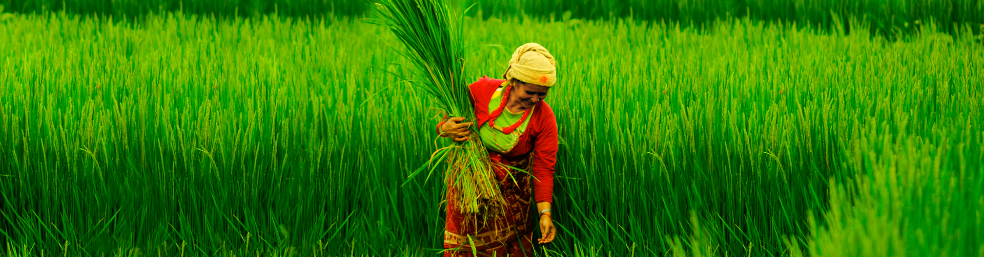 Agricultural Transformation in Nepal: Trends, Prospects and Policy Options